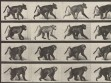 Eadweard Muybridge, Animal Locomotion, plate 748