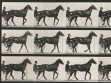 Eadweard Muybridge, Animal Locomotion, plate 588