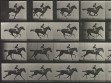 Eadweard Muybridge, Animal Locomotion, plate 627