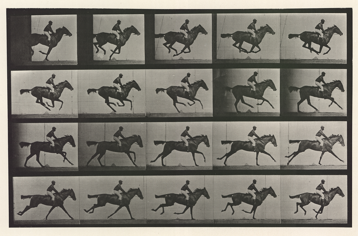 Eadweard Muybridge, Animal Locomotion, plate 627, 1880s