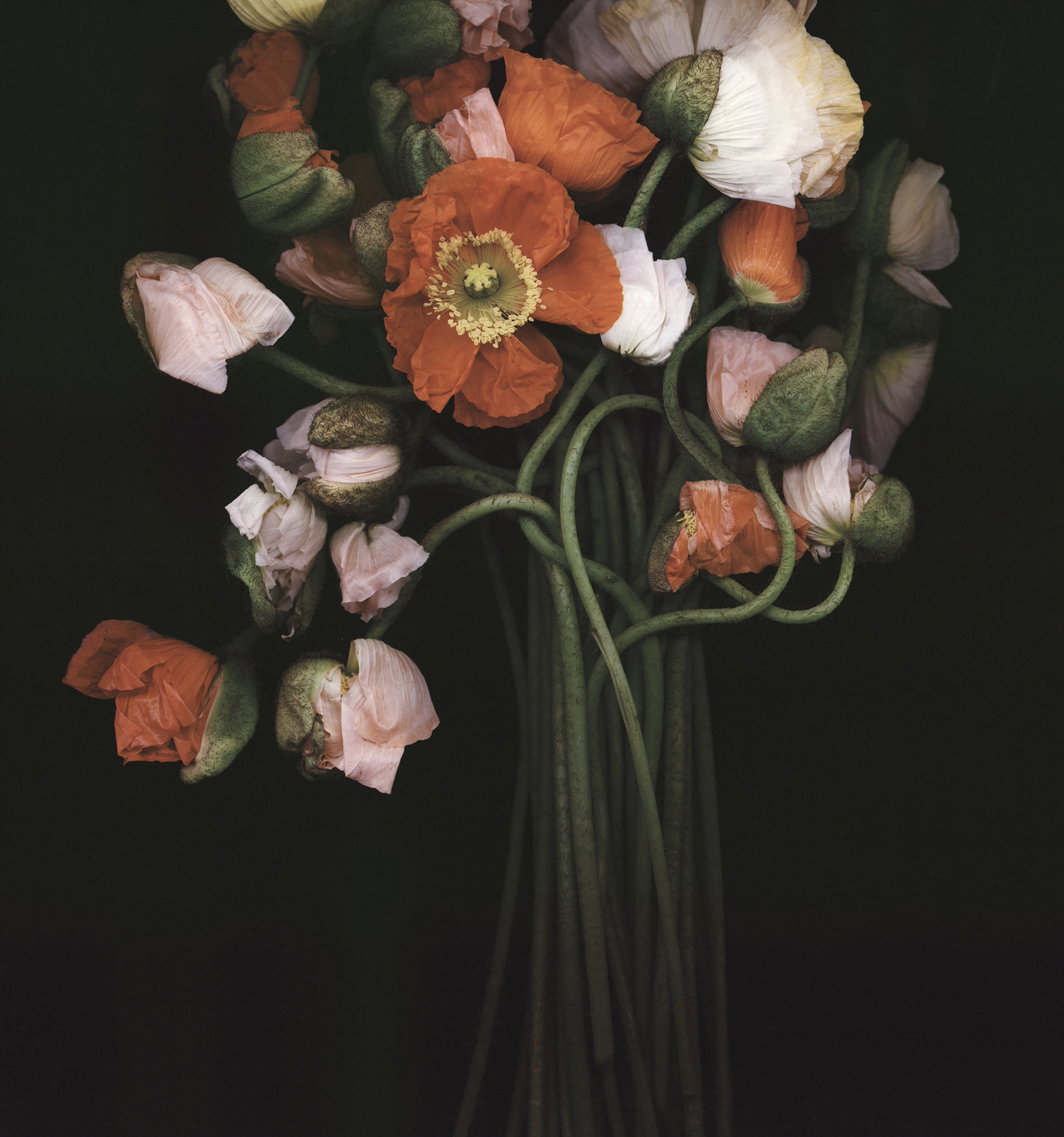 Poppy Bouquet, 2015